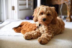 飼主必讀!小寵物狗吃保健品的4大準則