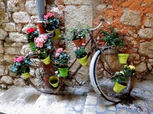 Flower Flash Brightens Up Streets